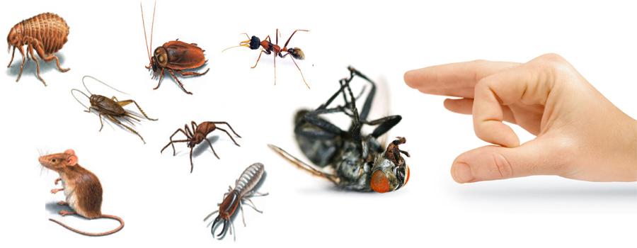http://supercleaningdubai.com/wp-content/uploads/2016/12/pest-control-services.jpg